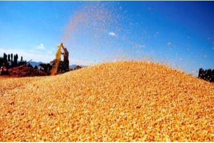 猪鸡饲料玉米豆粕减量替代技术方案