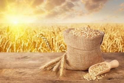 美国农业部小麦作物展望报告——2021年8月份刊中文版